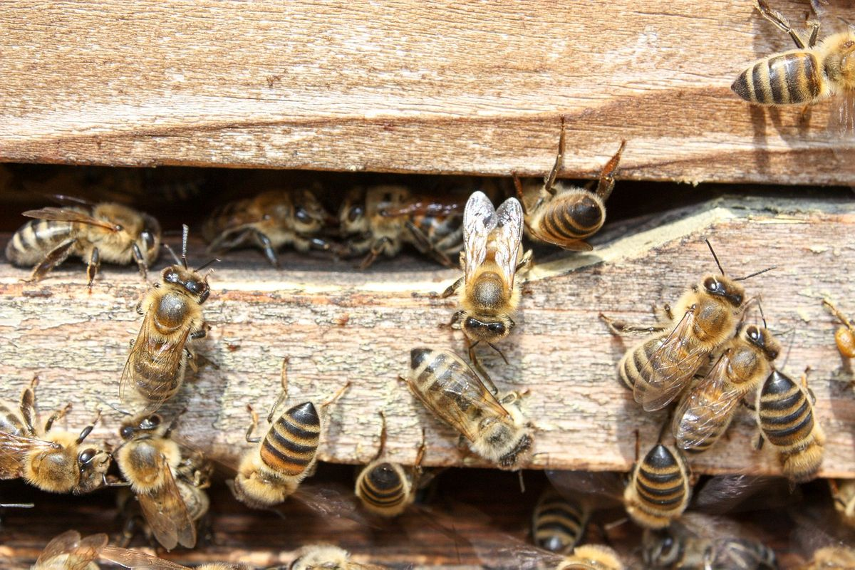 bees-2135428_1280